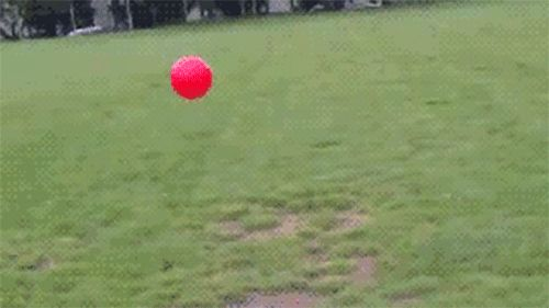 And when it comes to retrieving balls… | Cool Dog Has Amazing Reaction Time