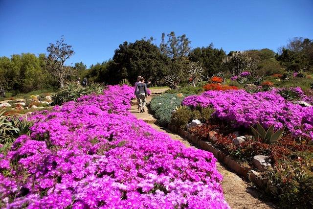 Kirstenbosch, Cape Town.  #explore  #summer