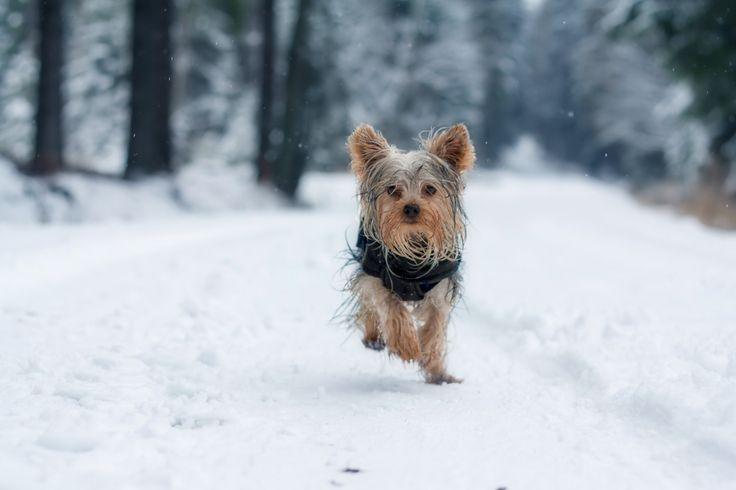Enjoying snow - What is better than running on fresh snow?