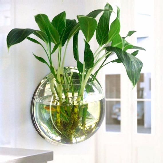 how to make money plant grow faster