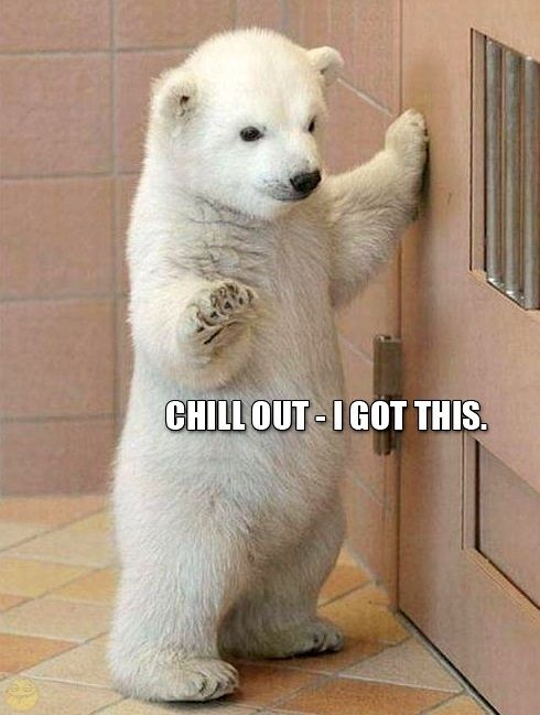 Cute baby polar bear meme.