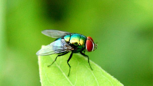 Seguramente tengas moscas en tu casa porque esos insectos están por todos los rincones del mundo merodeando alrededor de la comida yhaciendo su molesto ruido. Pero las moscas no solo son fastidiosas sino que también son muy peligrosaspara la salud.En el mercado existen una gran cantidad de productos para eliminar las moscas, el problema es …
