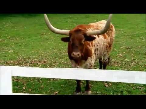 28 best commercials images on pinterest tv ads tv commercials and budweiser clydesdale bull super bowl 2010 commercial ad aloadofball Choice Image