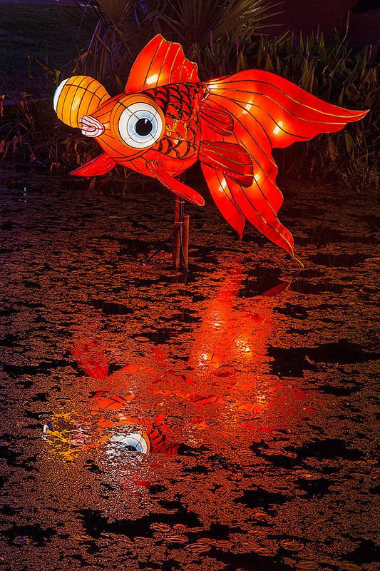Red Goldfish lantern glowing at the Chinese Lantern Festival taking place every year around the lagoon of Fair Park in Dallas, for the duration of the State Fair of Texas - Carefully selected by GORGONIA www.gorgonia.it