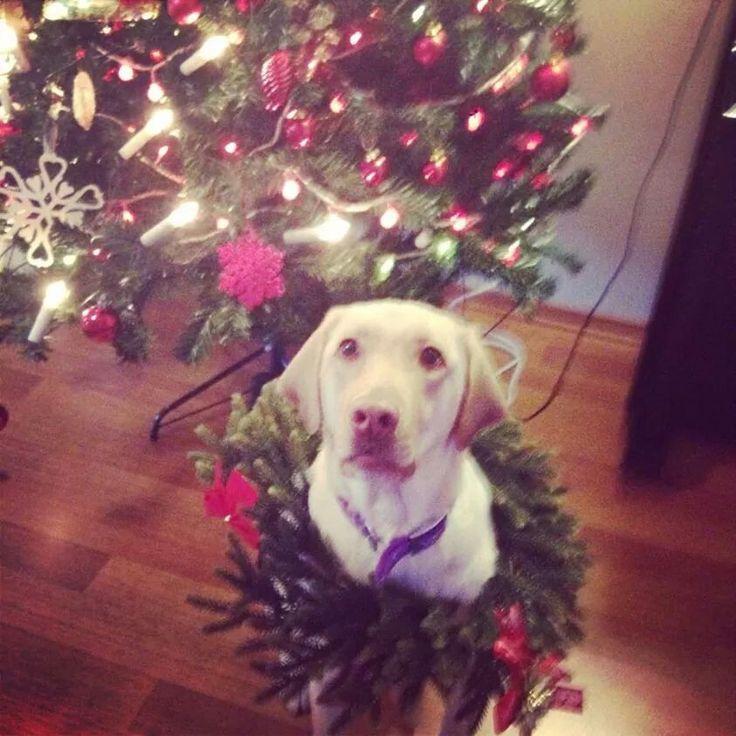 Mary cristmas