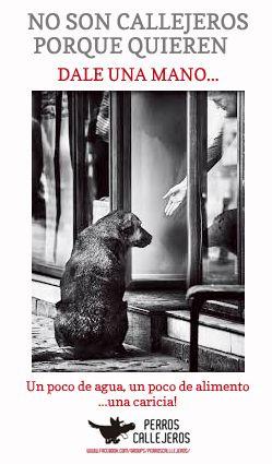 Ms de 25 ideas increbles sobre Perros abandonados en Pinterest