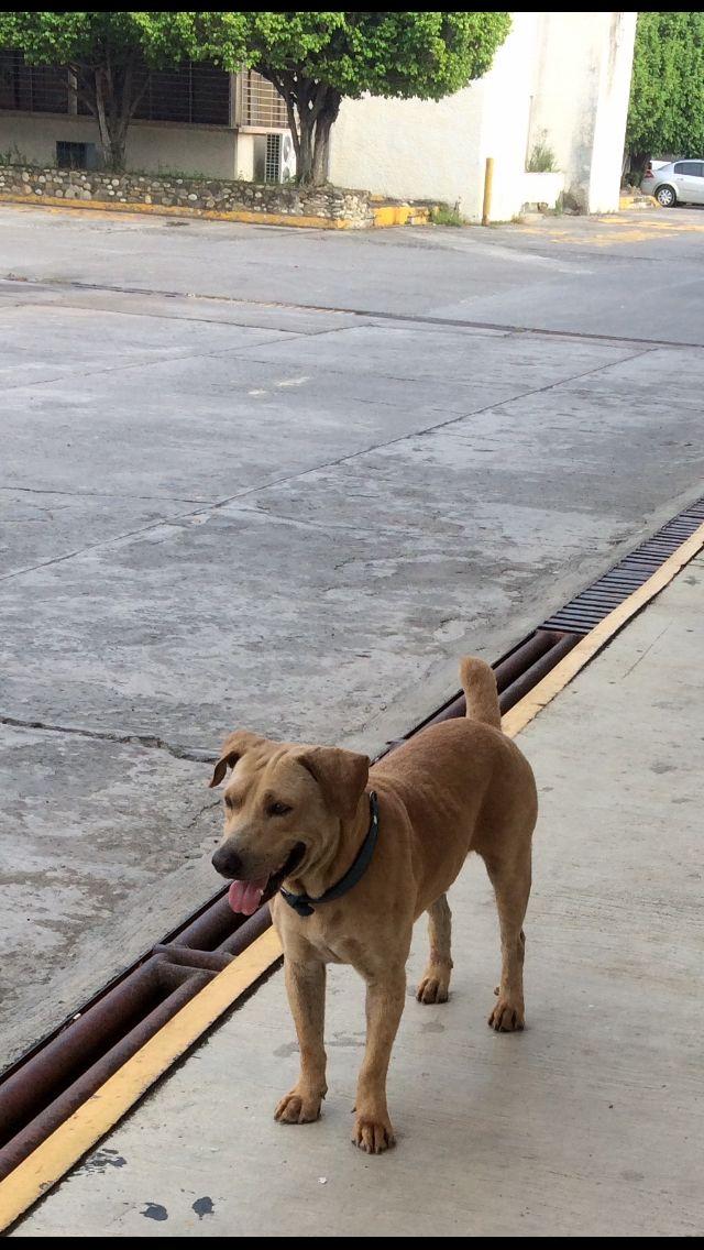 Rondin... es un perro que está en las instalaciones de una empresa y acompaña a todos los vigilantes cuando van a dar el rondín, que bueno que todavía hay personas buenas que cuiden a los perros. 🙂