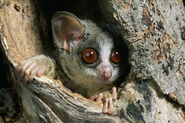 17 Best images about Primates: Apes / Monkeys / Arboreals ...