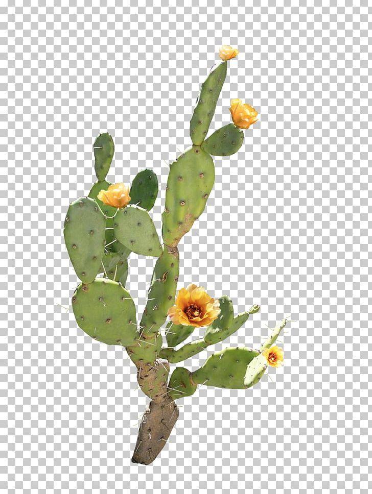 Flower Barbary Fig Cactaceae Png Cactus Designer Encapsulated Postscript Floral Design Flower Arranging Cactus Art Print Cactus Fig