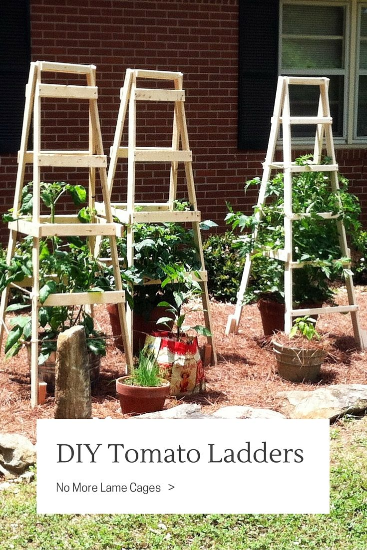 Diy Tomato Ladders No More Lame Cages Tomato Trellis