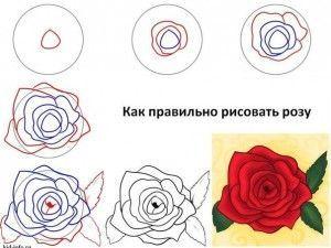 rosas dibujo a lapiz paso a paso - Buscar con Google