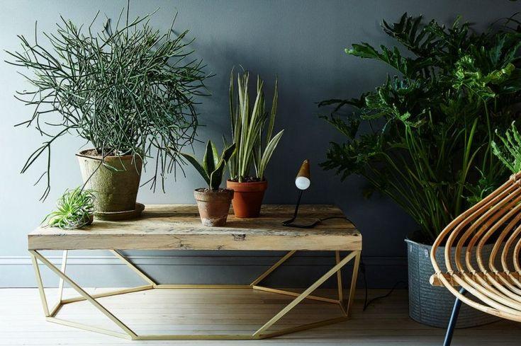 Растения, которые делают воздух чище — Полезные советы