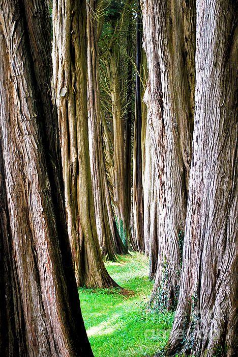Glimpse inside an arboretum.