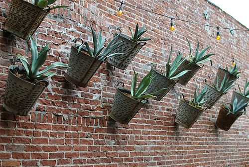 hanging agave - Google Search