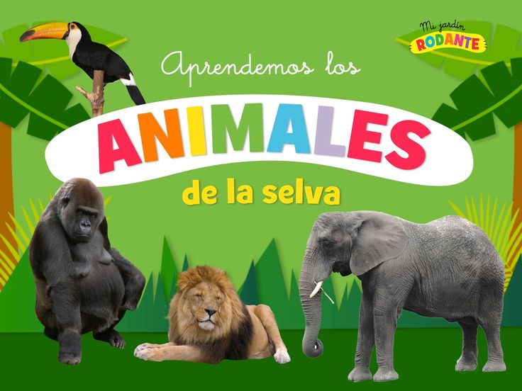 ¡Fotos, colores, música y sonido para aprender los animales de la selva jugando!