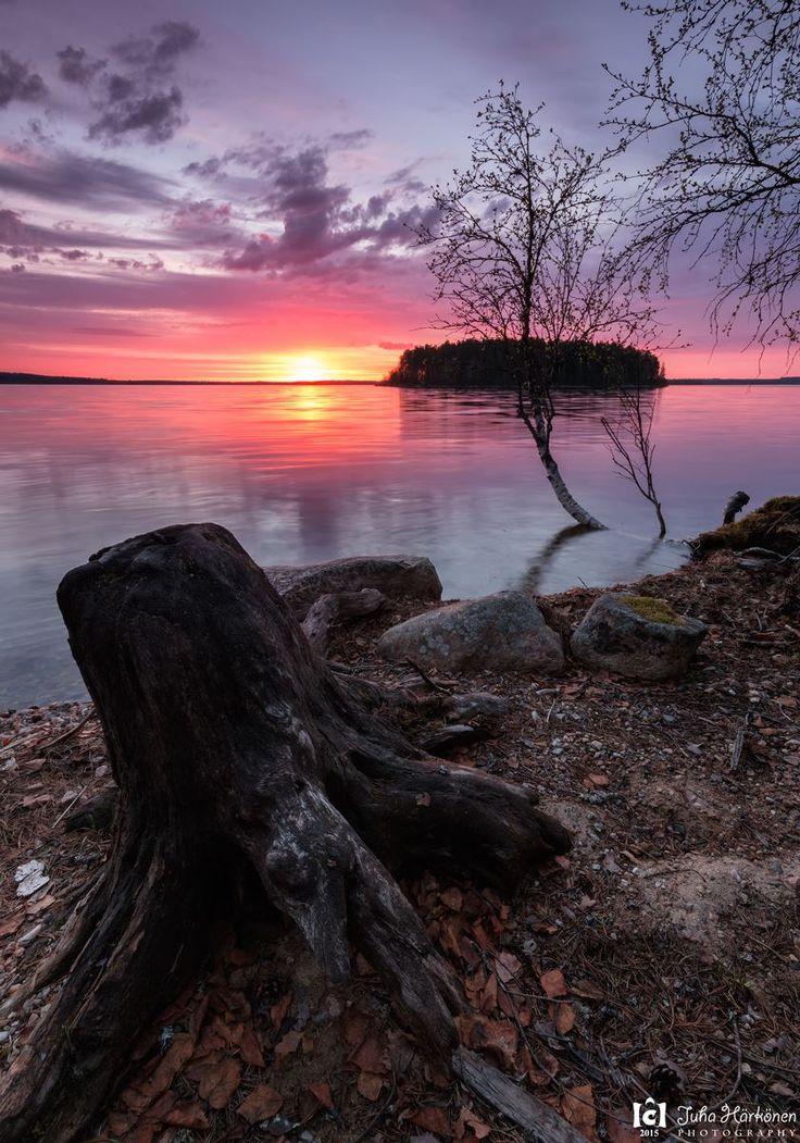 Sunrise 27.5.2015  Kiantajärvi, Suomussalmi