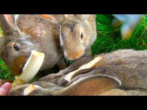 Bunny Rabbits Eating Banana