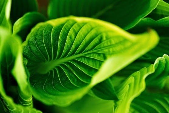 BioOrbis: Fotossíntese artificial