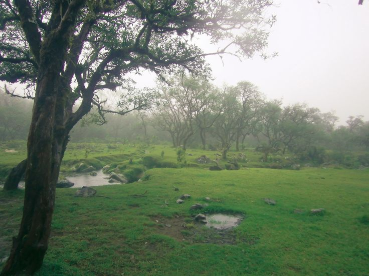mystical mist - VIEWS OF LOE VALLEY AT GOWA INDONESIA