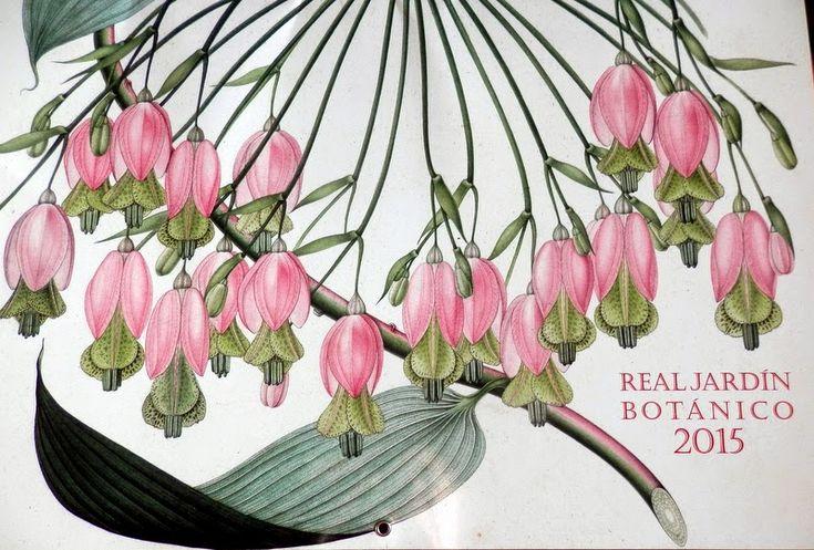 El Blog de La Tabla: Mutis en el calendario 2015 del Real Jardín Botáni...