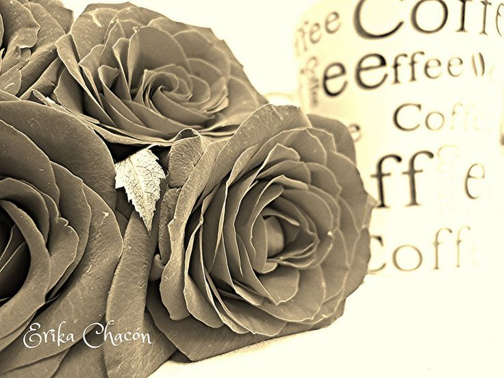 Coffe and Roses
