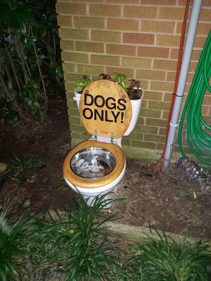 Toilet Planter/Water Bowl for My Dogs :)