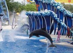 SEAWORLD® ORLANDO, il parco acquatico marino più famoso al mondo