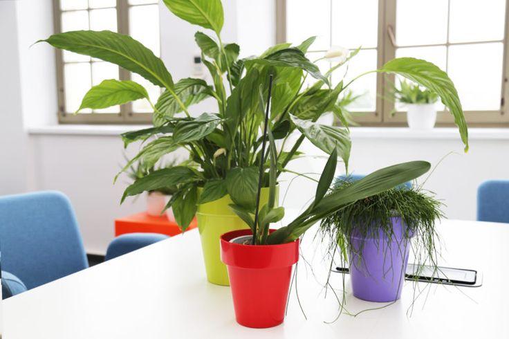 Zdrowe powietrze dzięki roślinom   Inspirowani Naturą   modern office design by teraplast