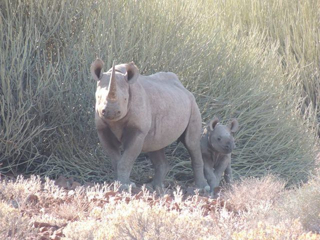 Save the Rhino Trust Namibia's photo.