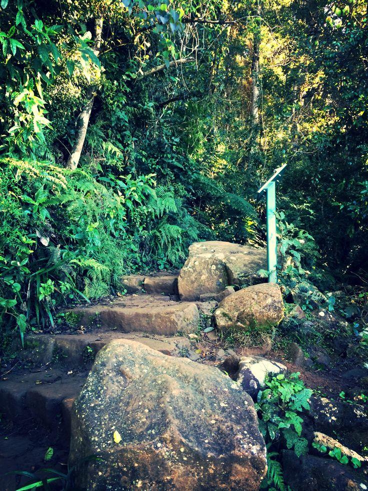 Trekking up Mt Warning #Australia