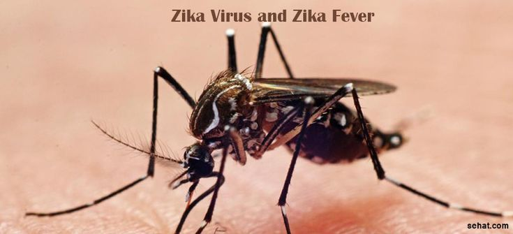 Here are the things you wanted to know about Zika Virus and Zika Fever. How the virus spreads, signs & symptoms, and possible protection against Zika.