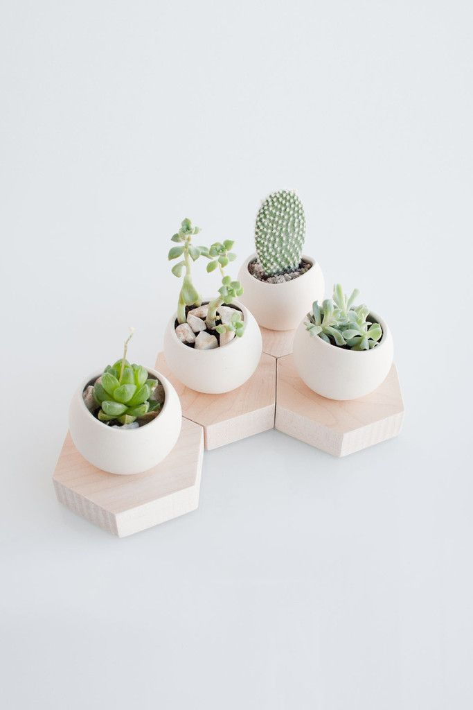 Ceramic cup with an organic shaped opening, sits on a solid maple hexagonal stand.  Perfect for miniature plants.