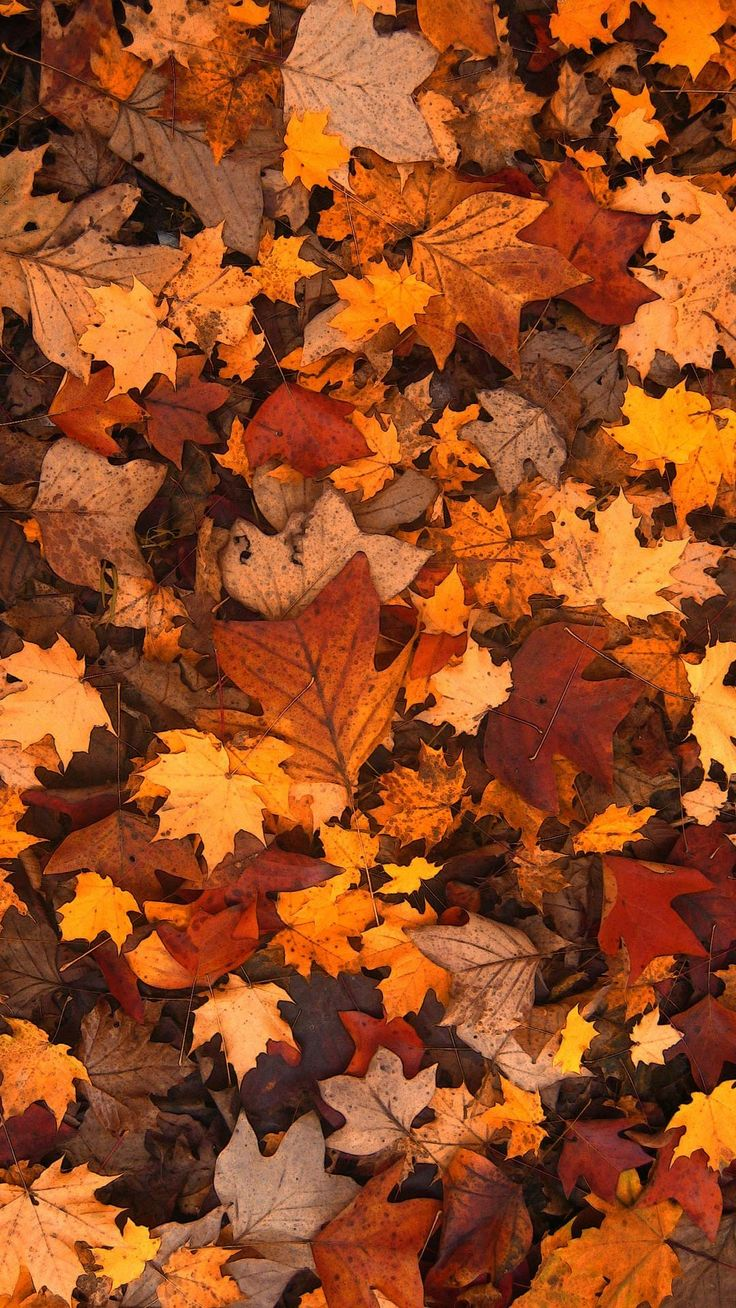 20+ Fall foliage wallpaper phone backgrounds for free