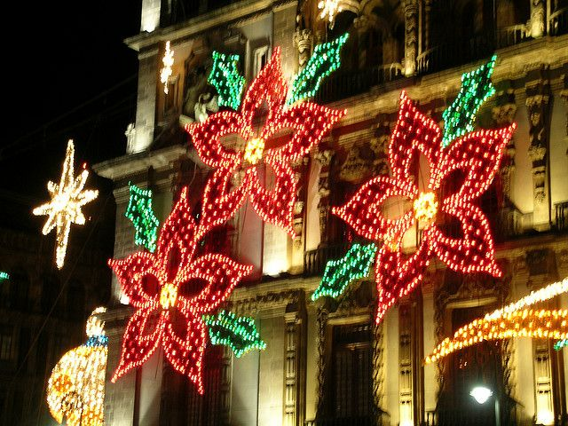 Poinsettia Christmas Lights In Mexico City Celebrar Casa