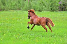 Horse gallop stock photo