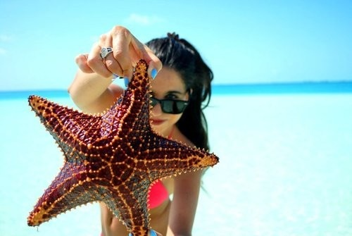 starfish: Sea Stars, Summer Photos, The Ocean, Summer Beach, Summerlovin, Summer Lovin, Summer Girls, Summertime, Summer Time