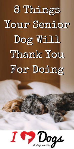 If your dog is in their golden years, do them a favor by going the extra mile for them.