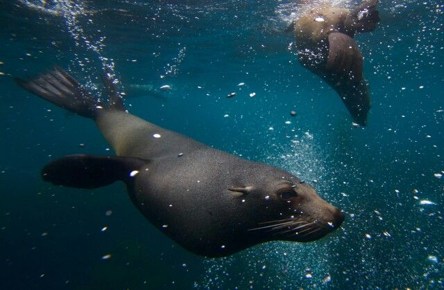 Ethical, non-intrusive snorkelling with seals. Let the animals interact on their free will and everyone will have an amazing experience. :-)