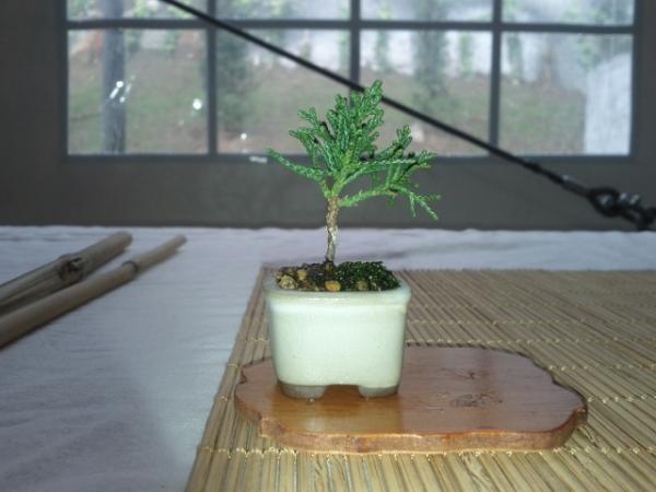 """pre mame juniperus """"thanks Emilio"""""""