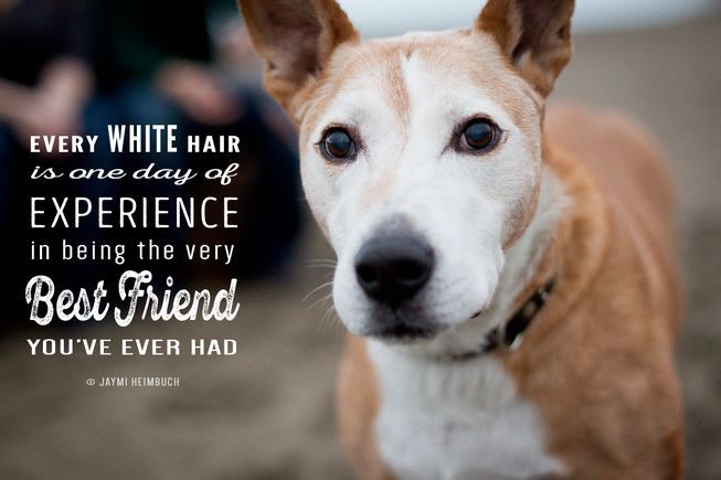 Every white hair is one day experience in being the best friend you've ever had.