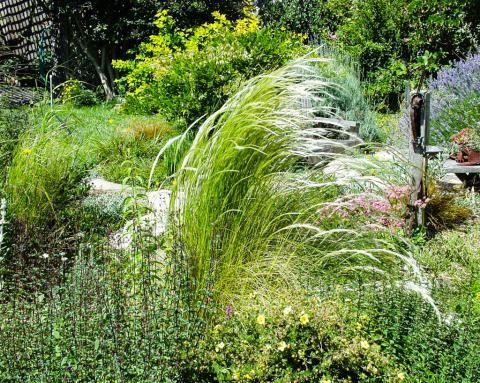 8 best sara butler pond images on pinterest perennials for Ornamental grasses for ponds