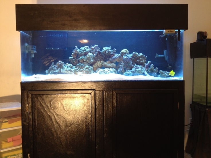 Fish tank stand and canopy finish home diy for Fish tank and stand