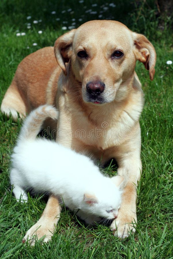 Dog And Kitten Together Stock Photography
