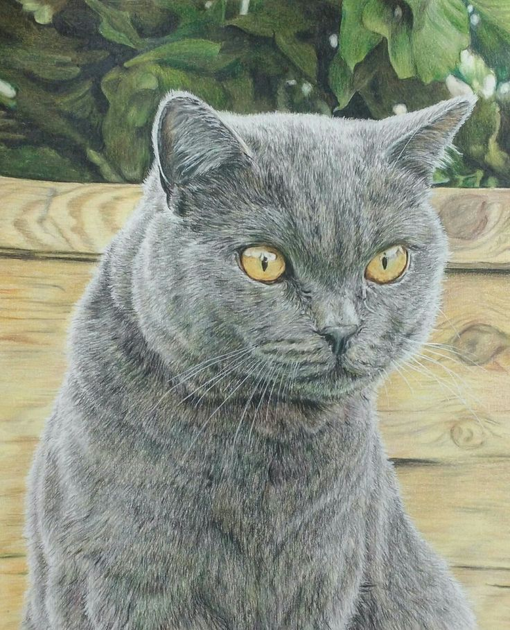 Katze 'Molly' Portrait; Buntstift