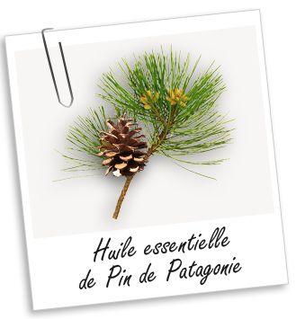 Huile essentielle de Pin de Patagonie   - Bibliothèque - Aroma-Zone