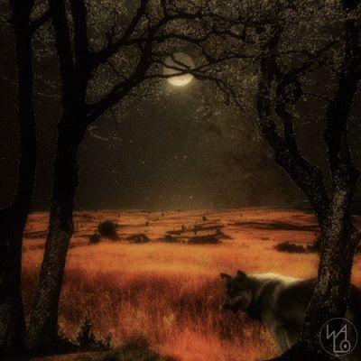 Campos con luna