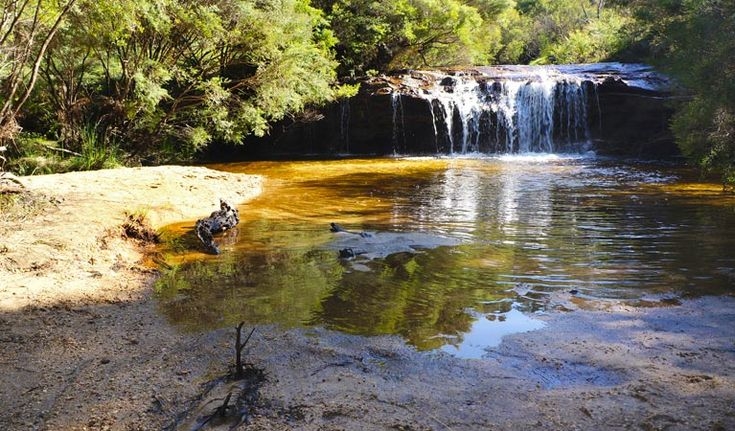 Charles Darwin walk at Wentworth falls: 5km, flat walking with a little stream to follow and ends up at the Falls