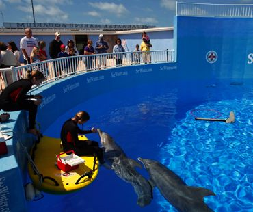 156 Best Images About Why I Love Clearwater Marine Aquarium On Pinterest Starfish Sea Turtles