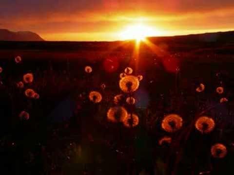 Los Pekenikes - Sol de medianoche