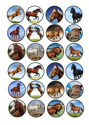 24 icing cupcake cake toppers edible mixed images Horse Pony